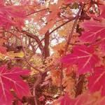 """The Fallen Autumn Experience"" by danjumbo"