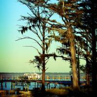 deep south coast Art Prints & Posters by shaney442
