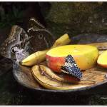 """Butterfly Tray 022608-PICT0825"" by DrDapper"