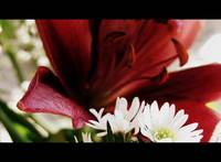 Lily Series: 1