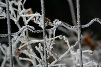 Ice Fence and Twigs  4428