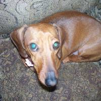 The Long Nose of the Dachshunds Art Prints & Posters by ryanclarkfilm
