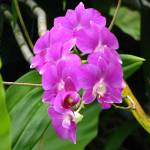 """""""Tropical Orchid"""" by SparkieBlues"""