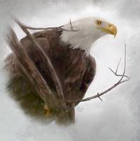 An eagle waits