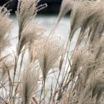 """STRAW IN WINTER"" by Adi_Bud_photoDesigner"