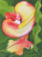 Red and Yellow calla