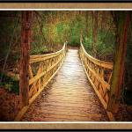 """crossing bridges"" by traceywaters"