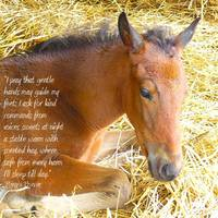 Pony's Prayer
