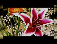 Lily Series: 6