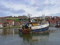 Fishing Trawler WY 485 at Whitby  (15699-RDA)