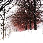 """Snowy Tree"" by Shesgottheeye"