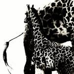 """""""Baby Giraffe"""" by Shesgottheeye"""