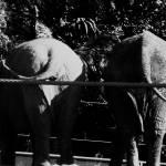 """""""Elephants"""" by Shesgottheeye"""
