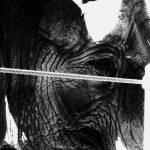 """Elephant"" by Shesgottheeye"