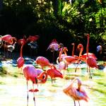 """Pink Flamingoes"" by Shesgottheeye"