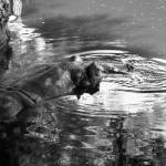 """Hippo Having a Swim"" by DonnaCorless"