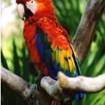"""""""Macaw"""" by dchristi"""