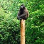 """""""Baboon"""" by PETER100"""
