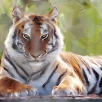 The Eye of the Tiger Art Prints & Posters by Patti Gray