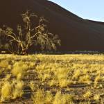 """""""Namib Desert"""" by KellyCheng"""