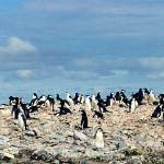 """Penguin Panorama"" by AnnTuck"