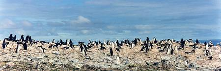 Penguin Panorama