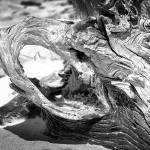 """Driftwood 1_DSC_1279A"" by AliciaFrese"