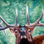 """Bugling Elk"" by jherrin"