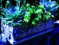 Stone Planter with succulents A blue