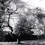 """Tree"" by Balthazar"