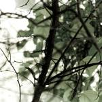 """Reversal VII"" by riaskaya"