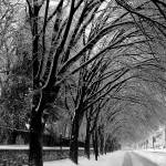"""Winter Tree Line Road"" by PhotoFitness"