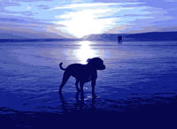 Staffordshire Bull Terrier on Beach in Blue
