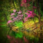 """Hocking hills red bud"" by deitrickd"
