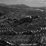 """Peloponnesian Olive and Orange Groves"" by bhneely"