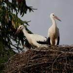 """storks"" by army45"