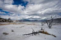 Thermal Yellowstone