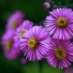 """""""violet dream"""" by Hanule"""