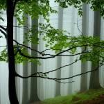 """""""misty morning"""" by Hanule"""