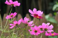Cosmos in the Sun