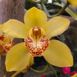 """""""Yellow Orchid"""" by CharlesHarlan"""