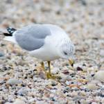 """Seagull on the Sand"" by FidelityPhotos"