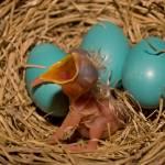 """New Born"" by BigRPhoto"