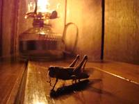 Grasshopper by Lamplight