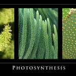 """Photosynthesis - Green Tryptych"" by Eileen"