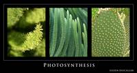 Photosynthesis - Green Tryptych