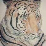 """Tiger Portrait"" by SusieQArt"