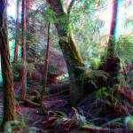 """forest 3D"" by codfather"