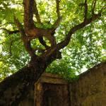 """""""tree"""" by alexx_g"""