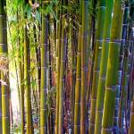 """bamboo"" by alexx_g"